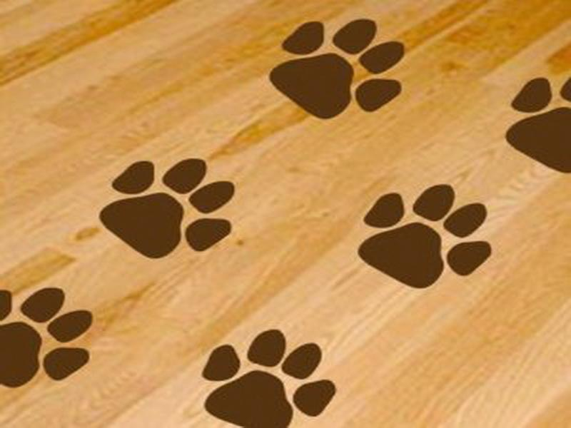 The appealing pics above is section of Dog Paws Print Wallpaper for 800x600
