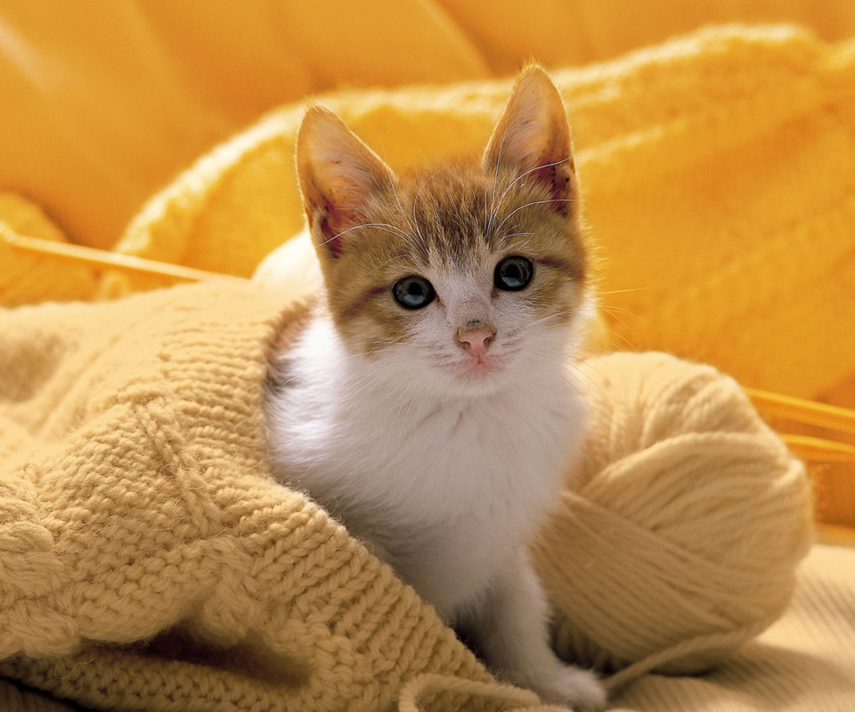 Tablet PC Pet Wallpaper Download Wallpapers Backgrounds Photos 960x800