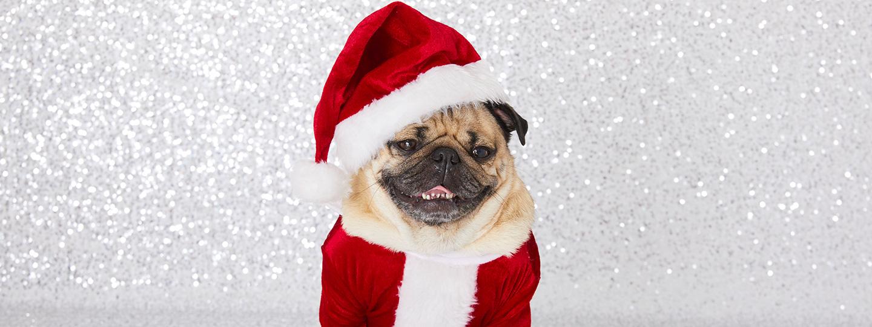 FREE Doug the Pug Christmas Wallpapers   ClairesBlog 1440x541