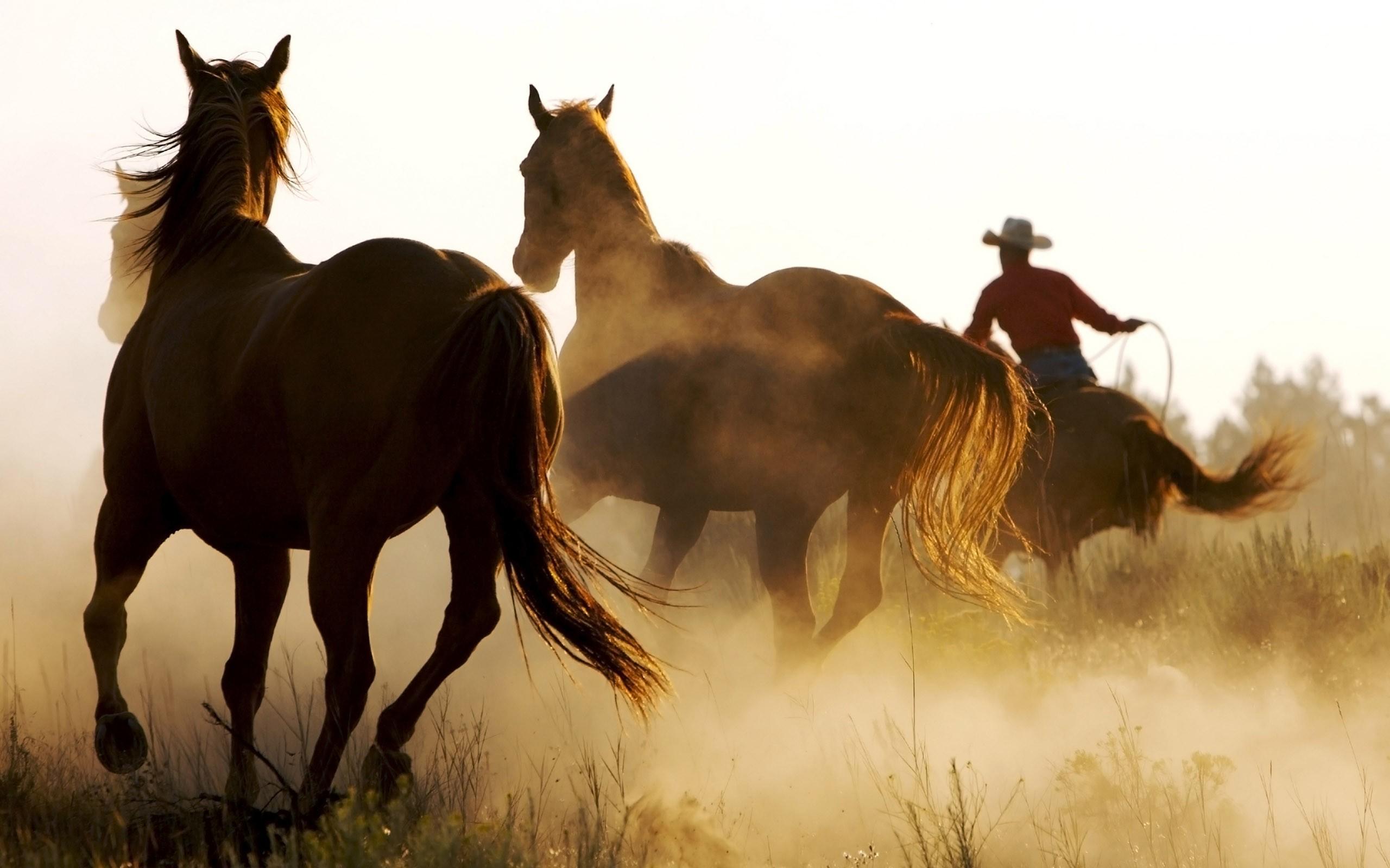 2560x1600 Wild Horses And Cowboy Desktop PC Mac Wallpaper