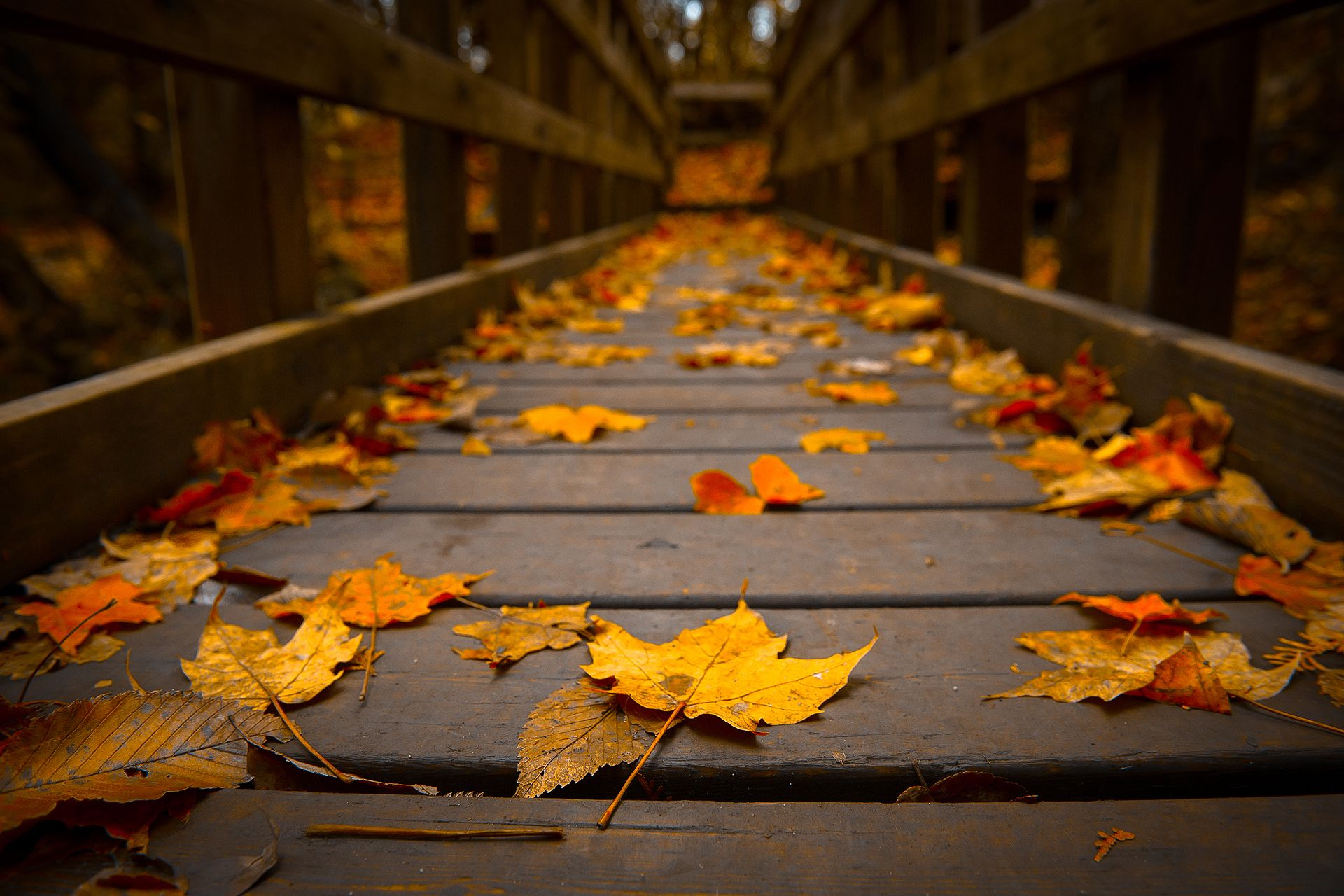 Autumn Leaves on a Bridge wallpaper Gallery 1920x1280