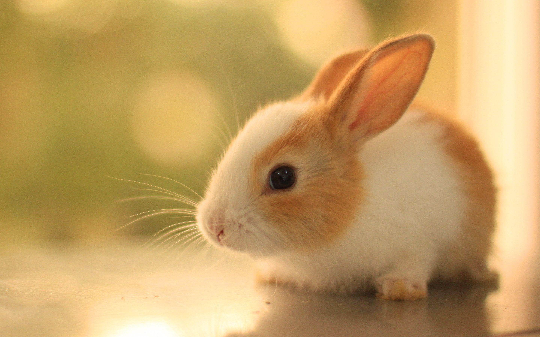 Cute Bunny Rabbits Wallpapers   Top Cute Bunny Rabbits 2880x1800