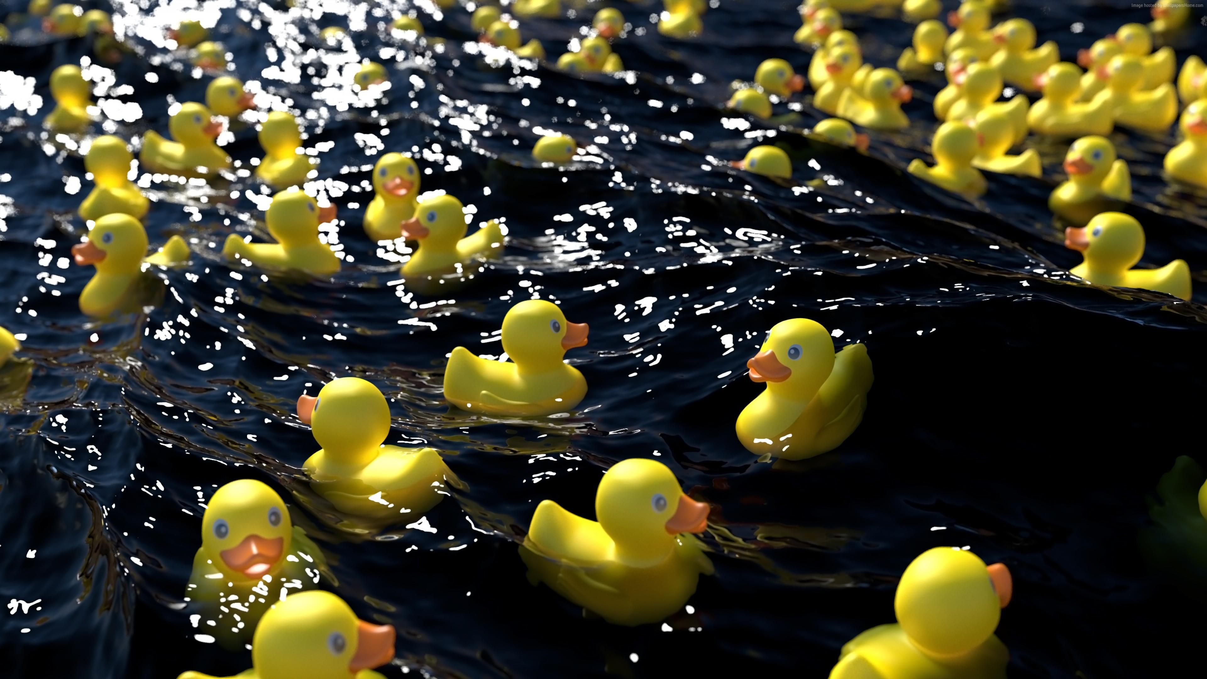 65 Rubber Duck Wallpapers   Download at WallpaperBro 3840x2160