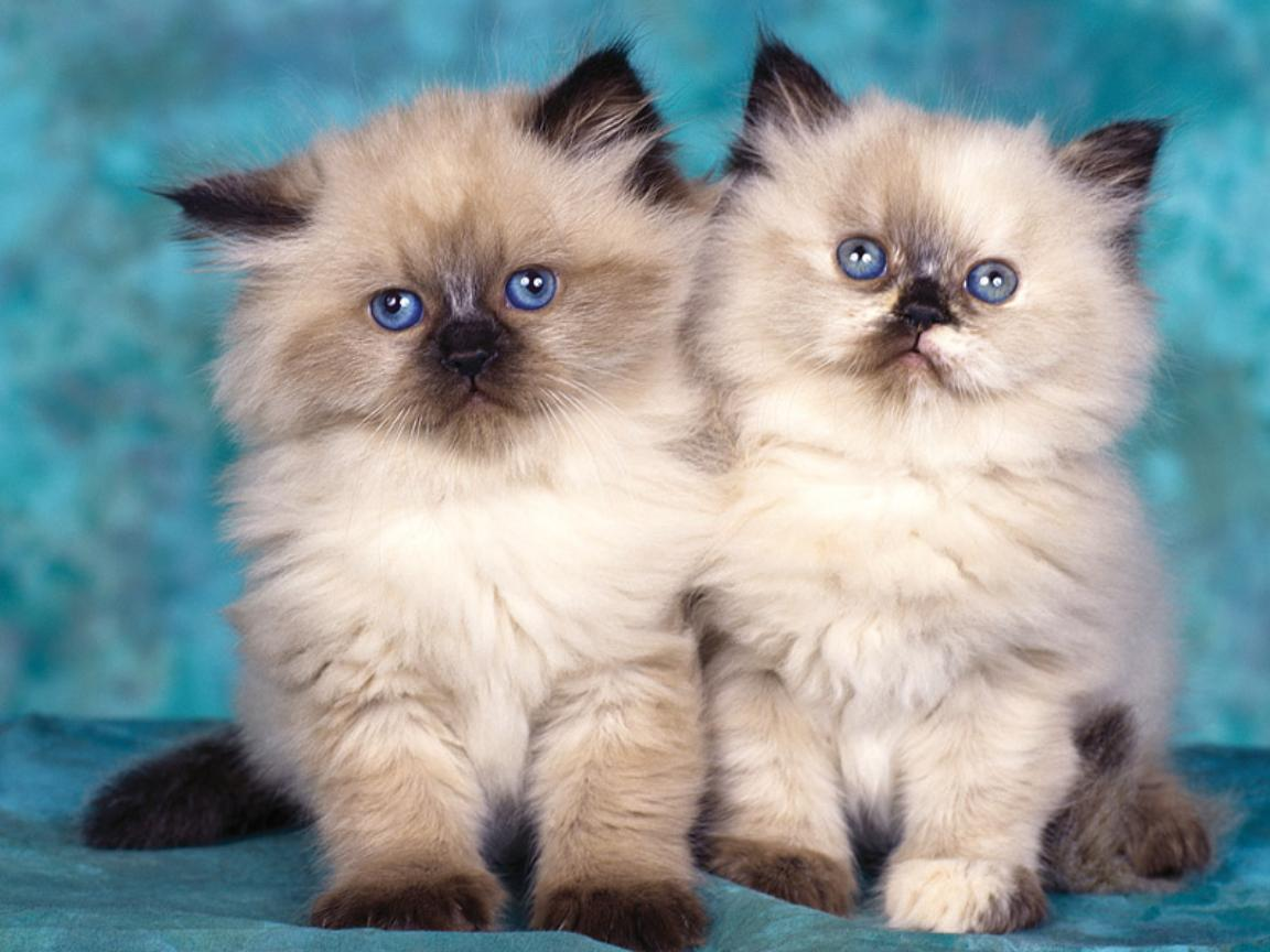 Lovely Cats Wallpaper 1152x864
