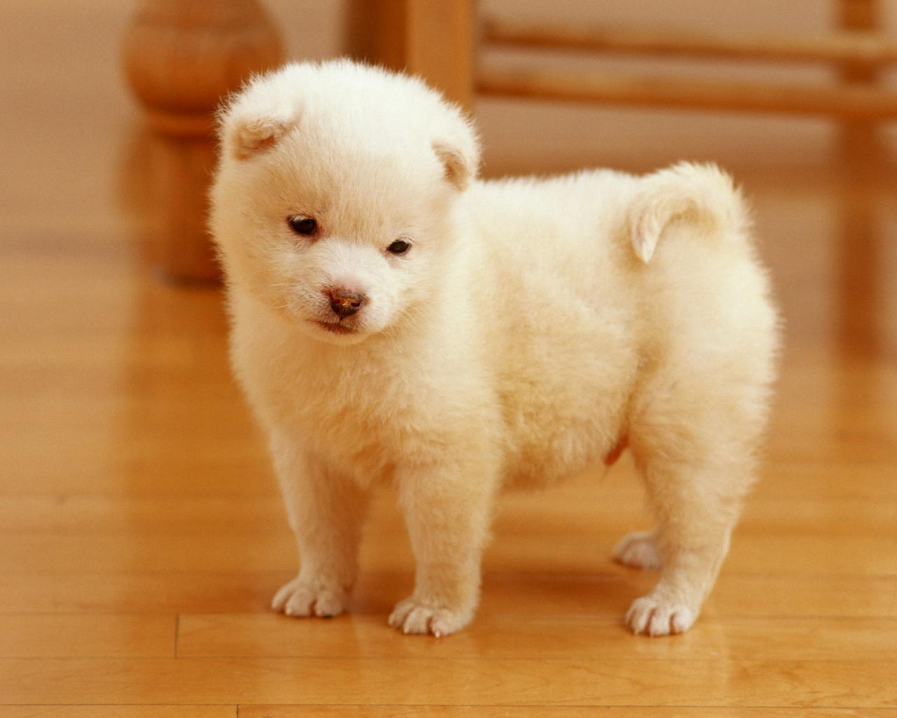 HD WALLPAPERS Cute puppies wallpapers 1280x1024