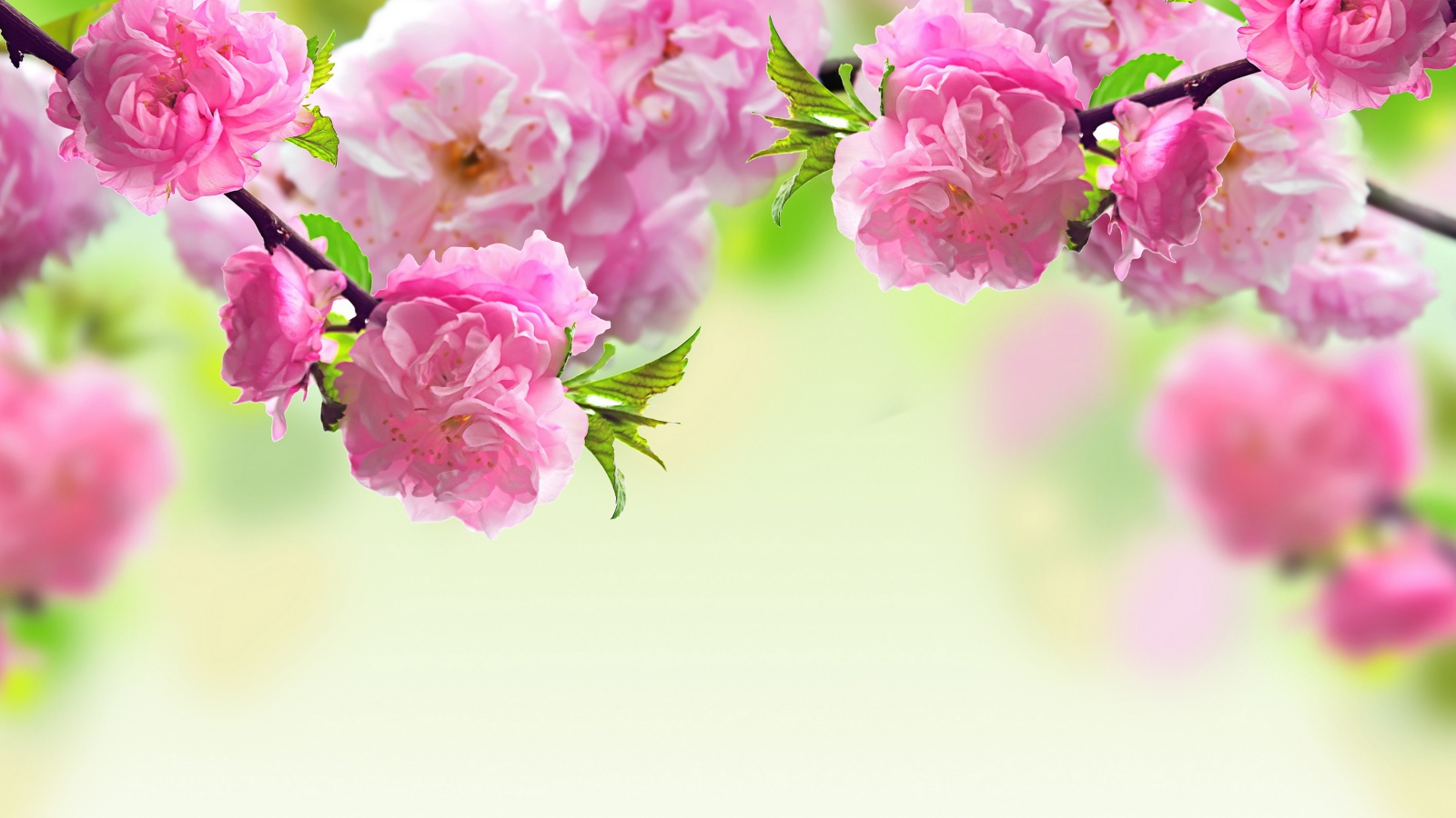 1600x900 cute flower layout backgrounds for myspace pink 1600x900