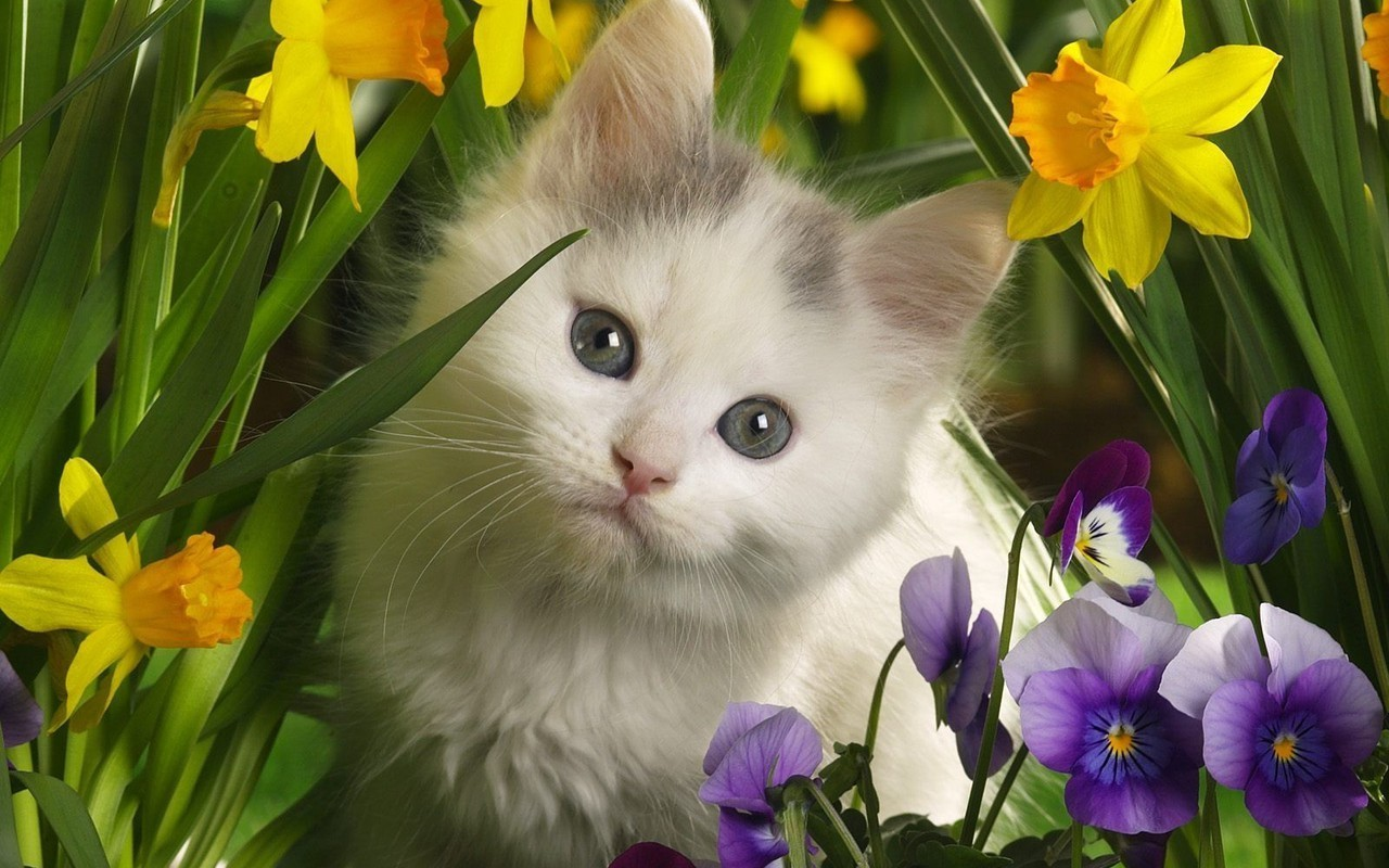 Cute Kitten   Kittens Wallpaper 16096569 1280x800
