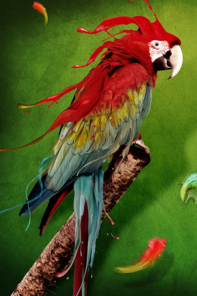 hd cool color parrot iphone 4 wallpapers backgrounds 640x960