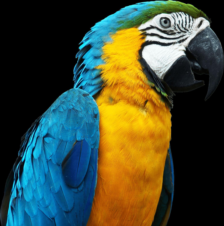 download  Parrot PNG transparent images transparent backgrounds 1487x1500