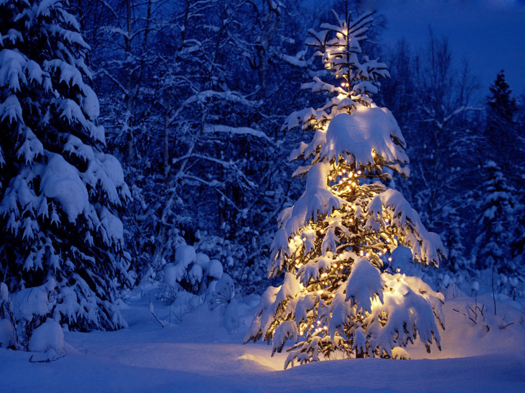 Landscape Christmas Tree In Snow   high quality background 1024x768
