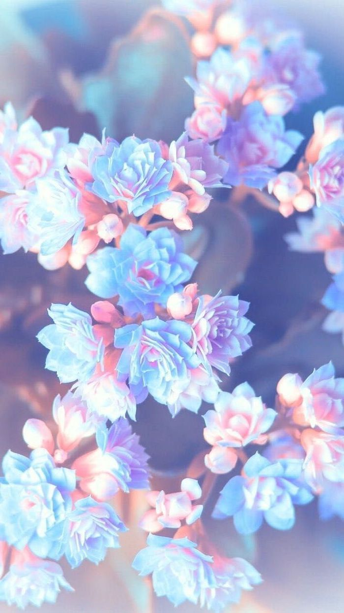 pink blue flowers blurred background spring wallpaper for desktop 700x1244