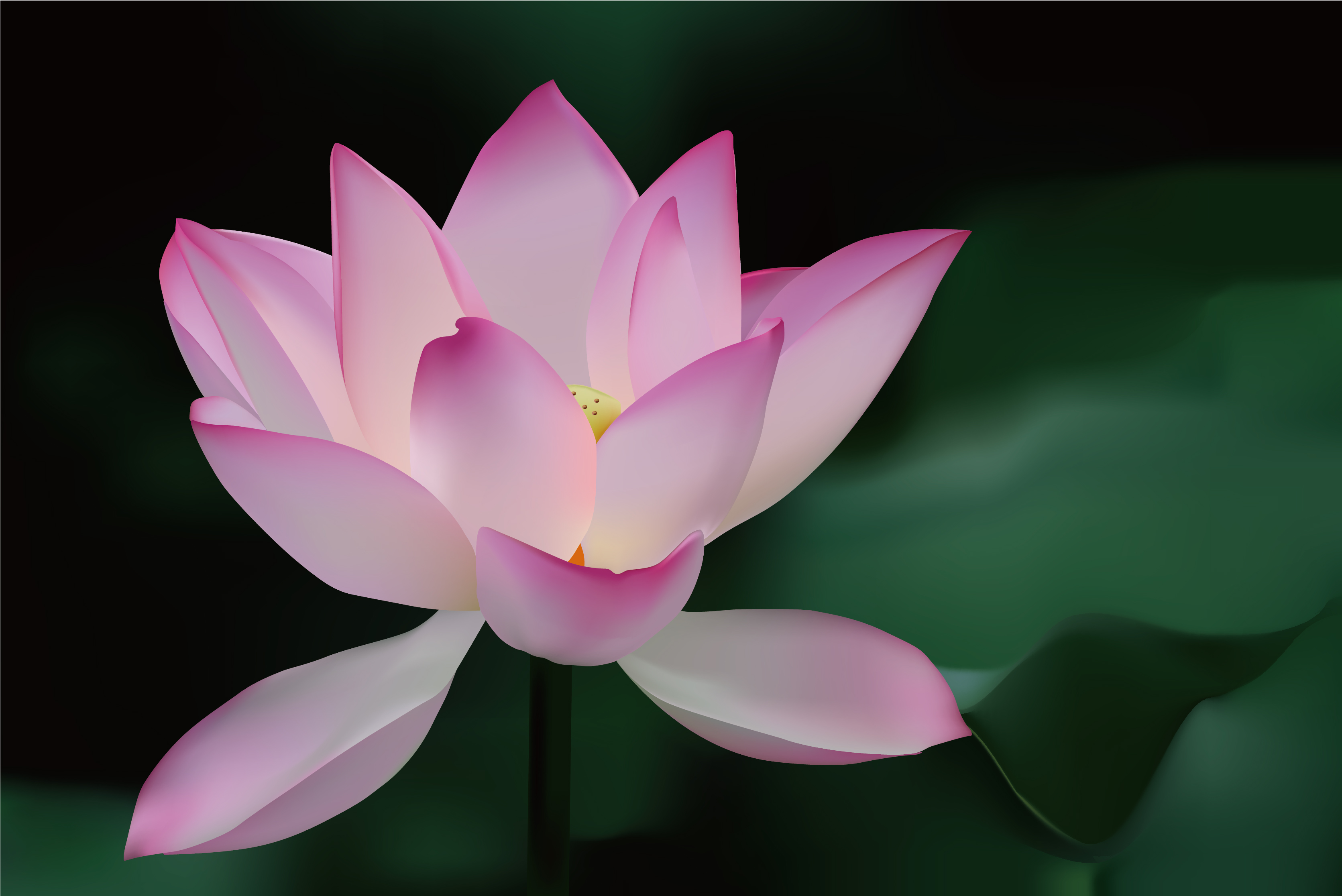 3343x2232px Free Lotus Flower Wallpaper Wallpapersafari