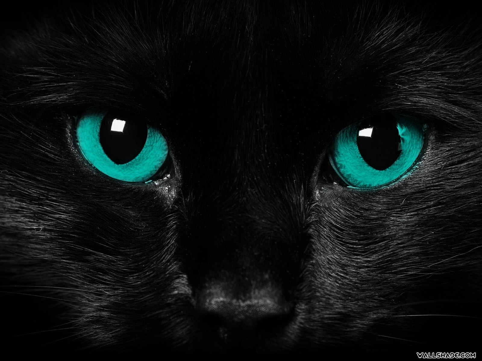 Scary Cat Eyes desktop wallpaper16001200 1600x1200