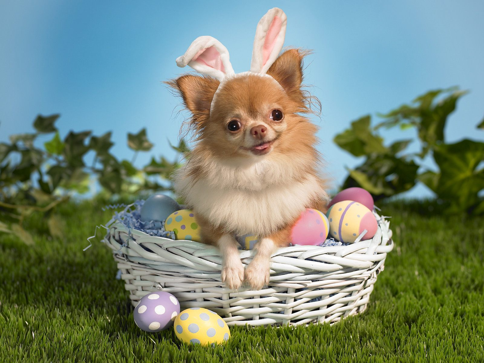 Bunny Wishes You a Happy Easter Wallpapers HD Wallpapers 1600x1200