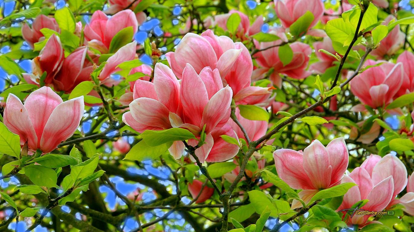 Pics Photos   Birds Spring Season Wallpaper 1366x768