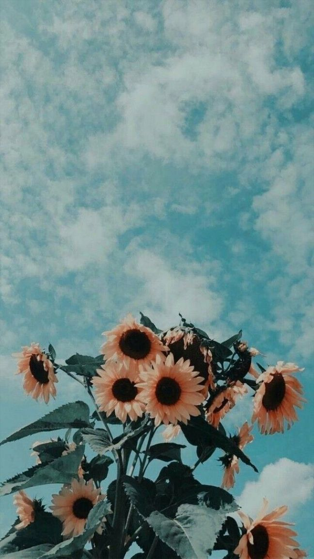 30 Marvelous Flower Wallpaper for Your New iPhone   Xtra Yummy 648x1152