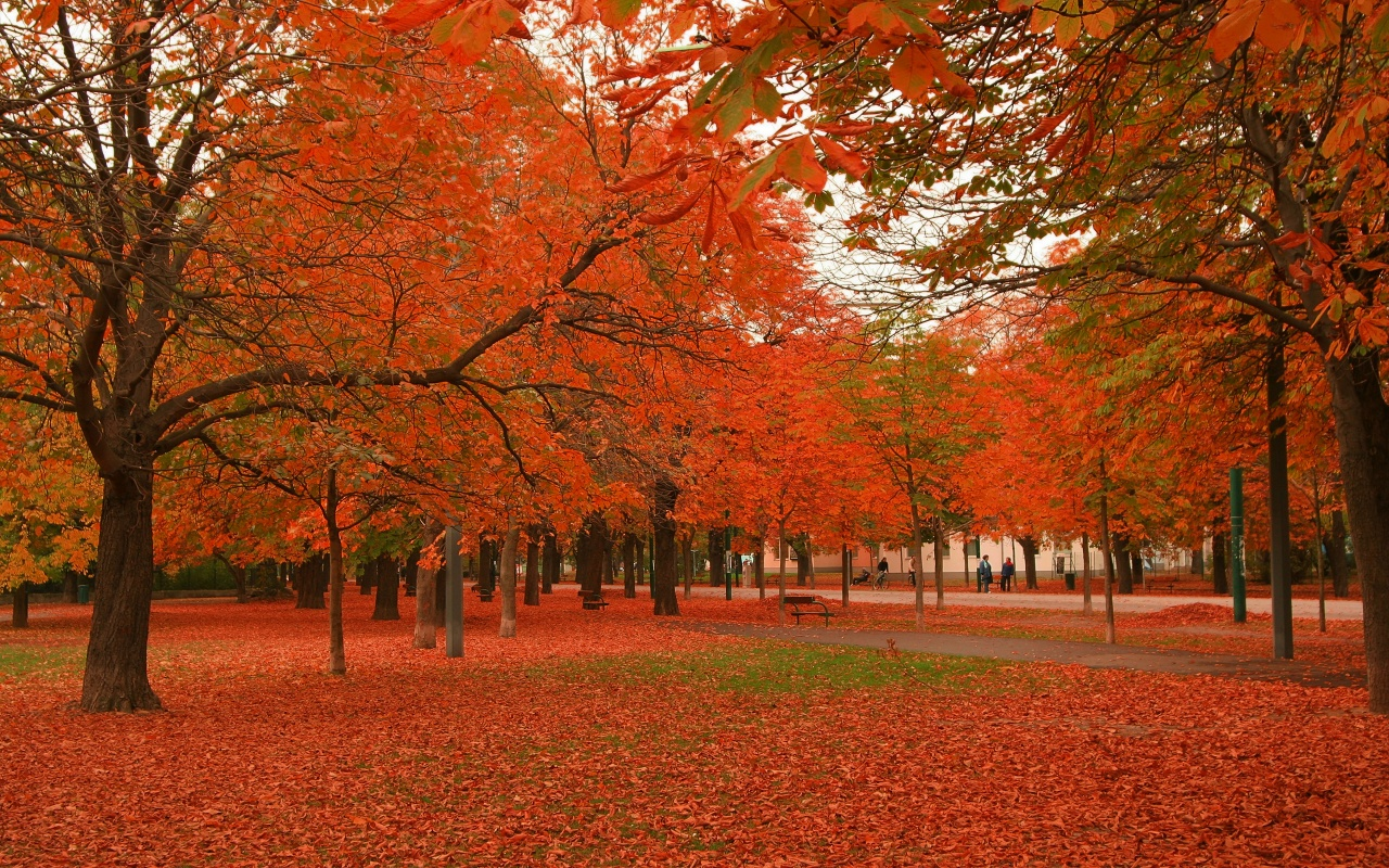 Beautiful Autumn Trees Wallpapers   1280x800   749458 1280x800