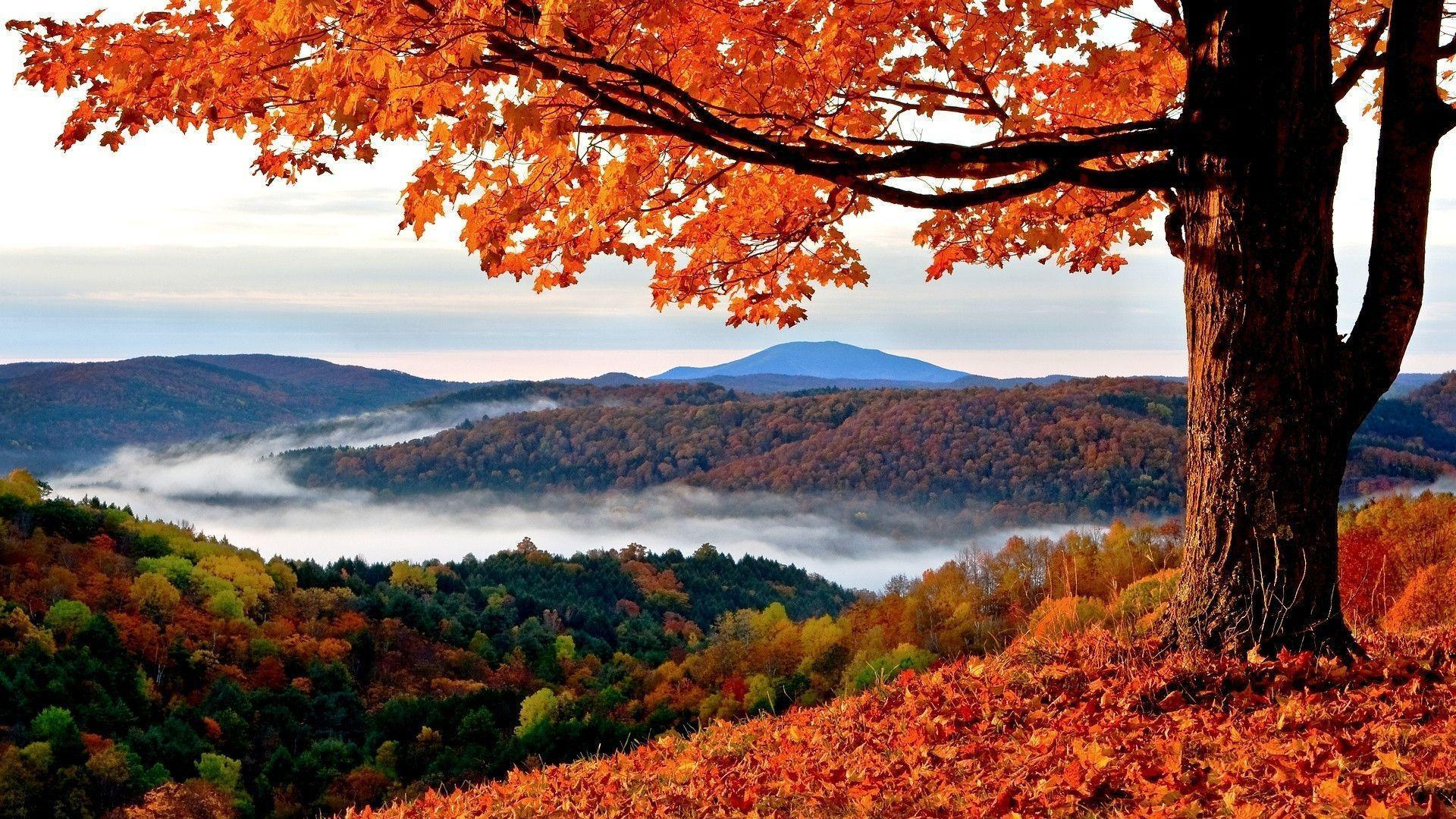Fall Wallpaper For Desktop   High Resolution Fall Background 1920x1080