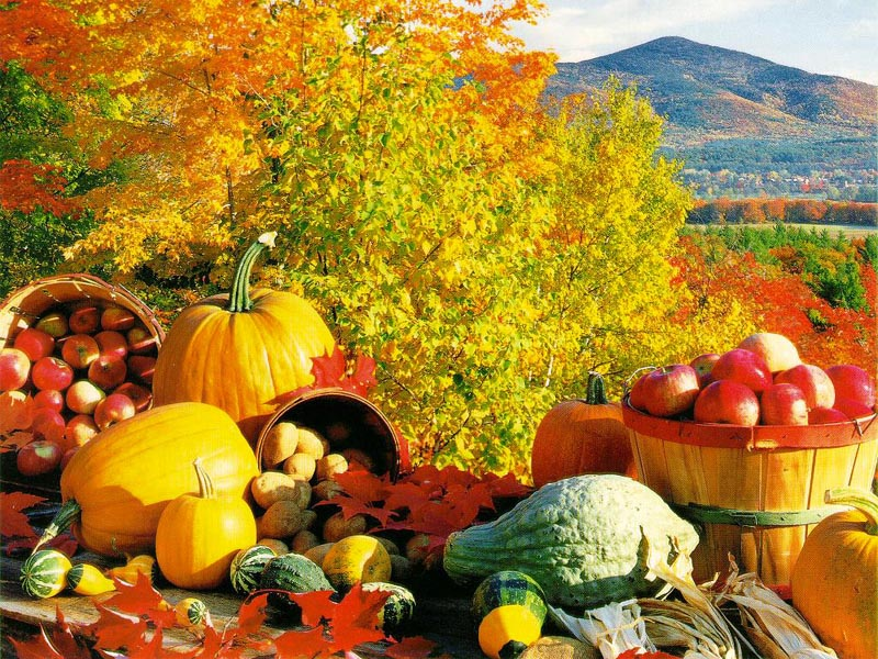 you enjoy this Fall Harvest wallpaper download from our Autumn 800x600