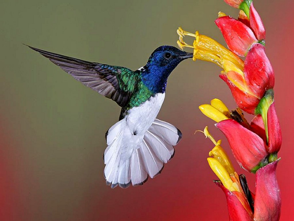 1024x768px floral wallpaper with birds wallpapersafari