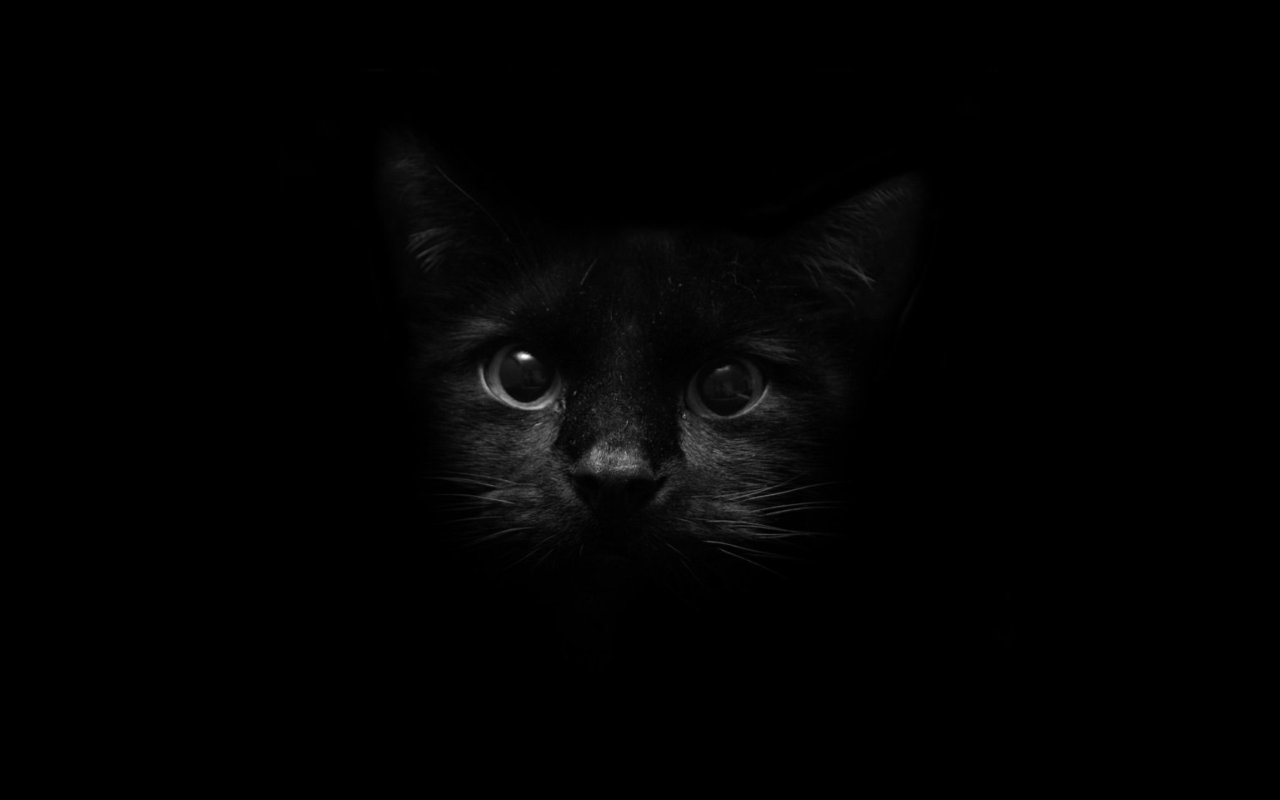Scary Black Cat Background Halloween Wal 3834 Wallpaper 1280x800