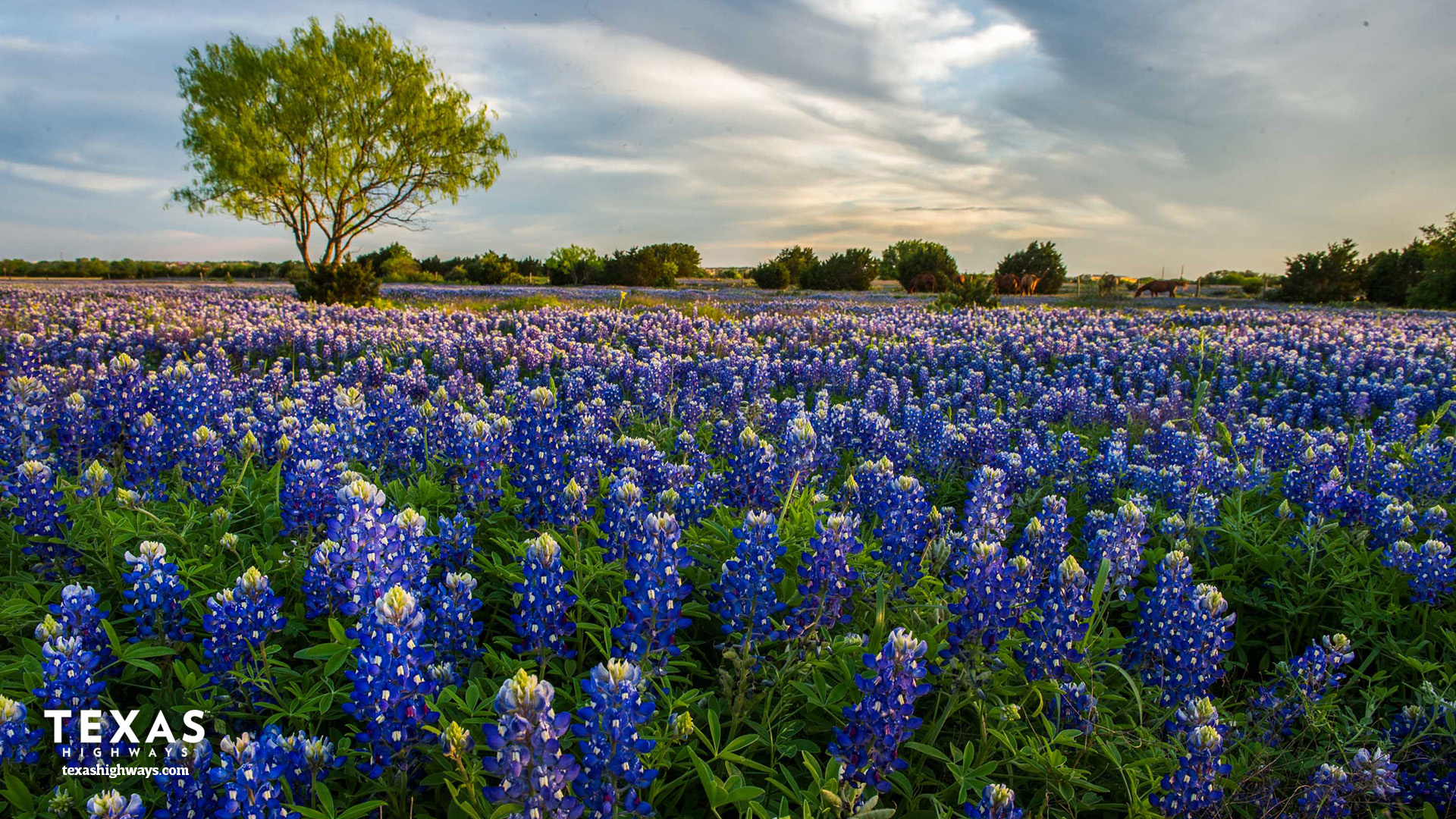 Get Your Texas Video Conferencing Background Texas Highways 1920x1080