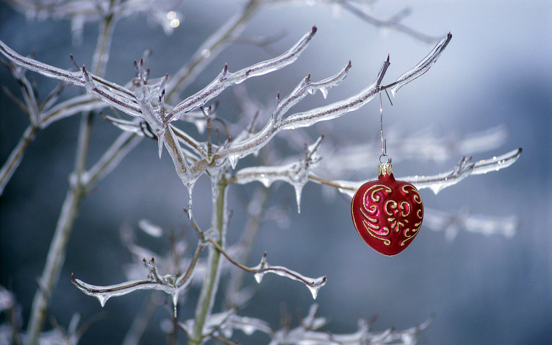 Ornament hanging on a frozen tree HD Wallpapers 1920x1200