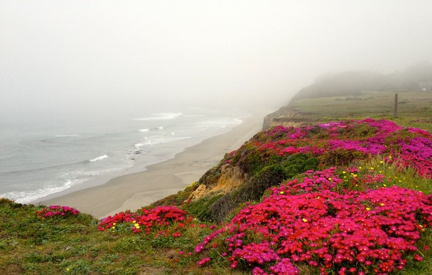in Sea Ranch CA   Traveler Photo Contest 2013   National Geographic 608x387