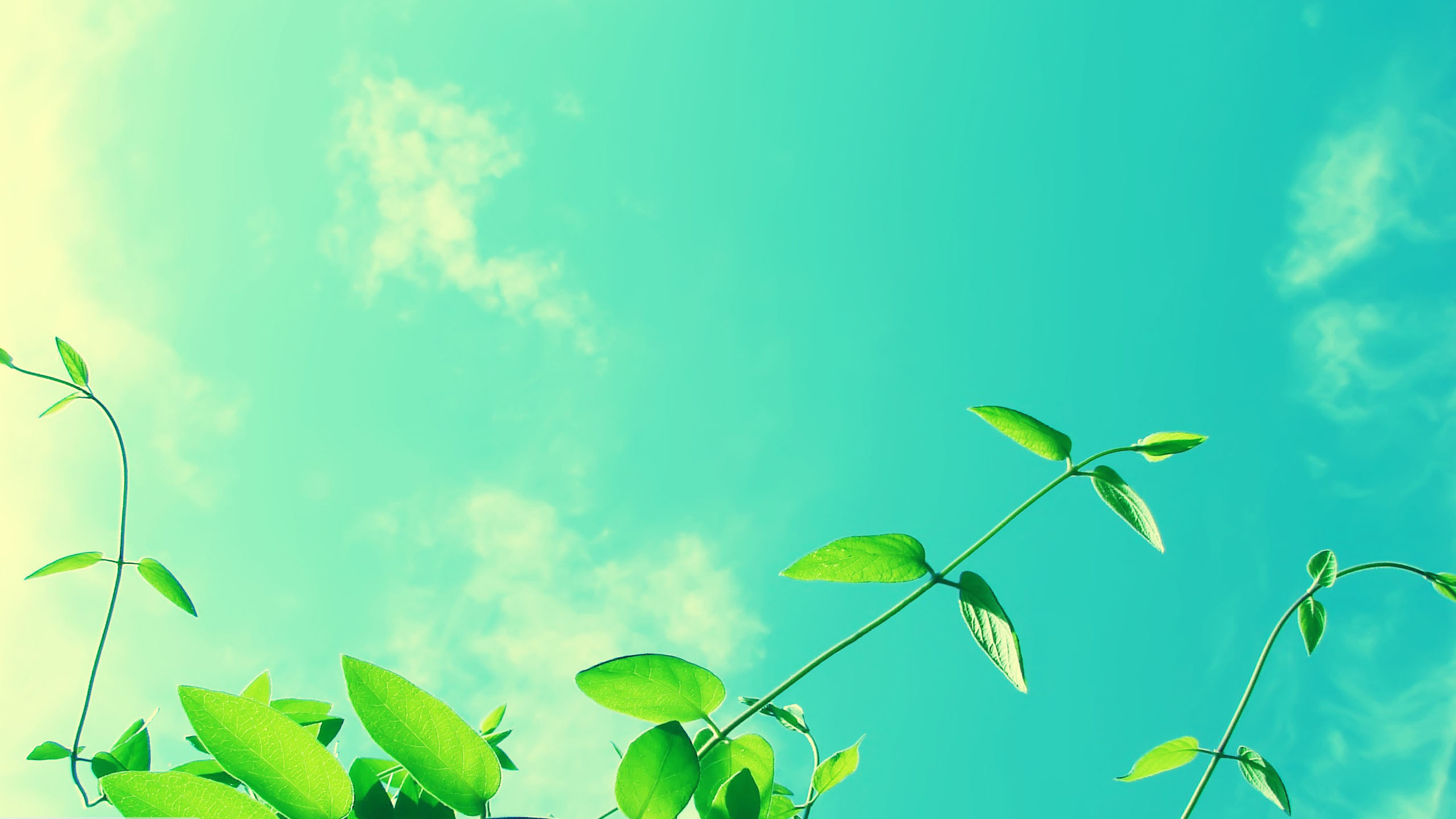 Vines And Sunny Sky Wallpaper 2560X1440jpg 2560x1440