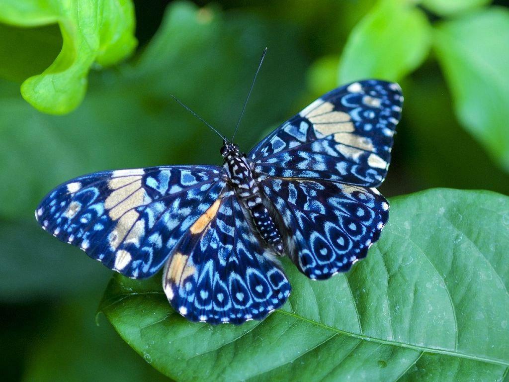 Butterfly   catsparrots and butterflies Wallpaper 22790729 1024x768