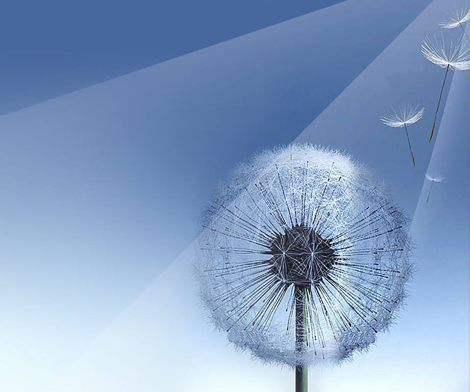Go Back Gallery For Samsung Galaxy Dandelion Wallpaper 960x800