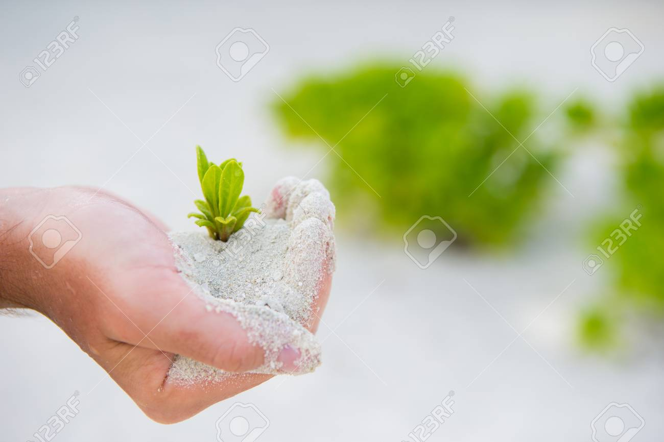 Hands Holding Green Sapling Background The White Sand Stock Photo 1300x866