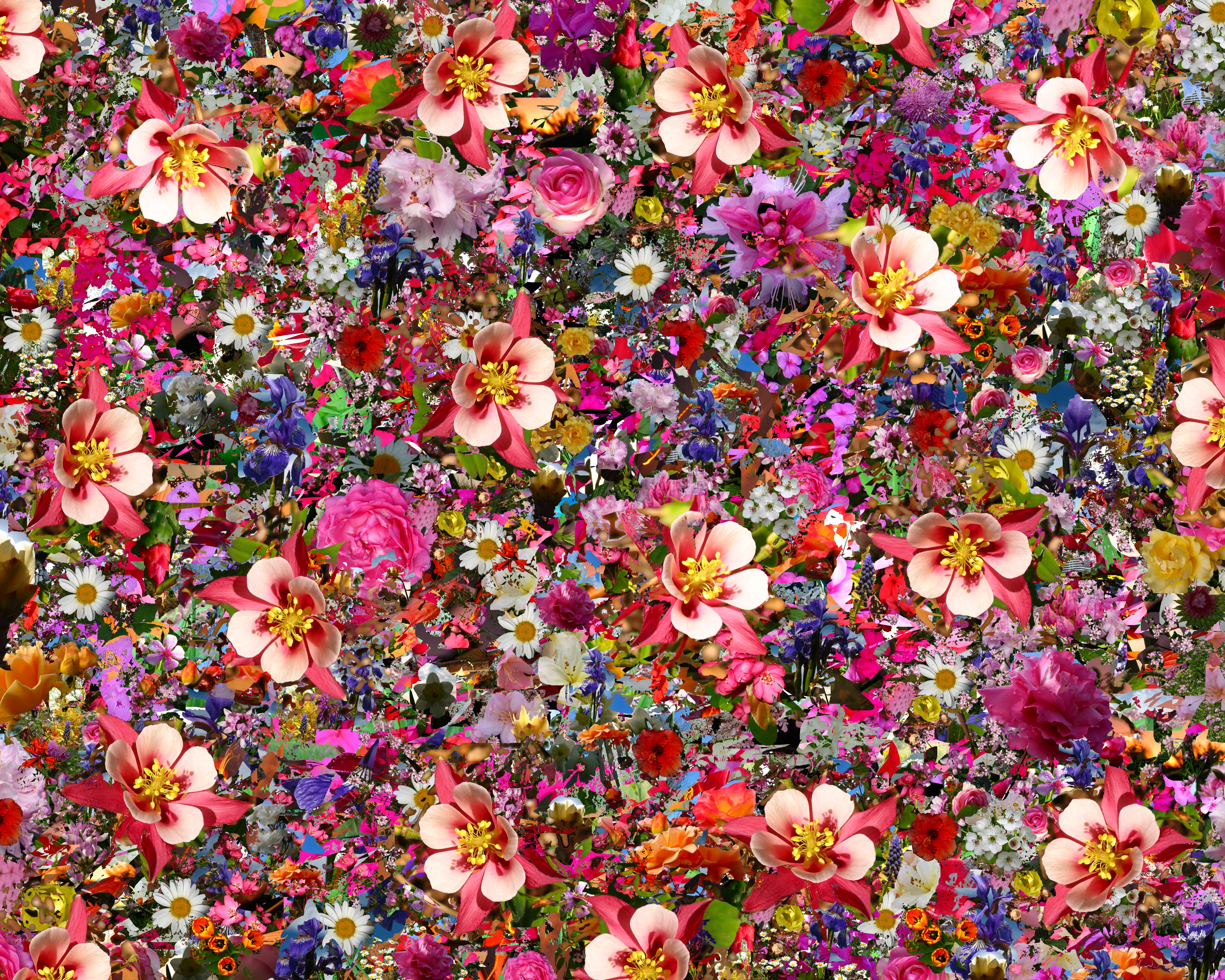 psychedelic Flower Wallpapers HD Desktop and Mobile Backgrounds 5000x4000