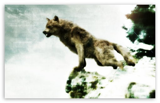 Jacob black werewolf form HD desktop wallpaper High Definition 510x330
