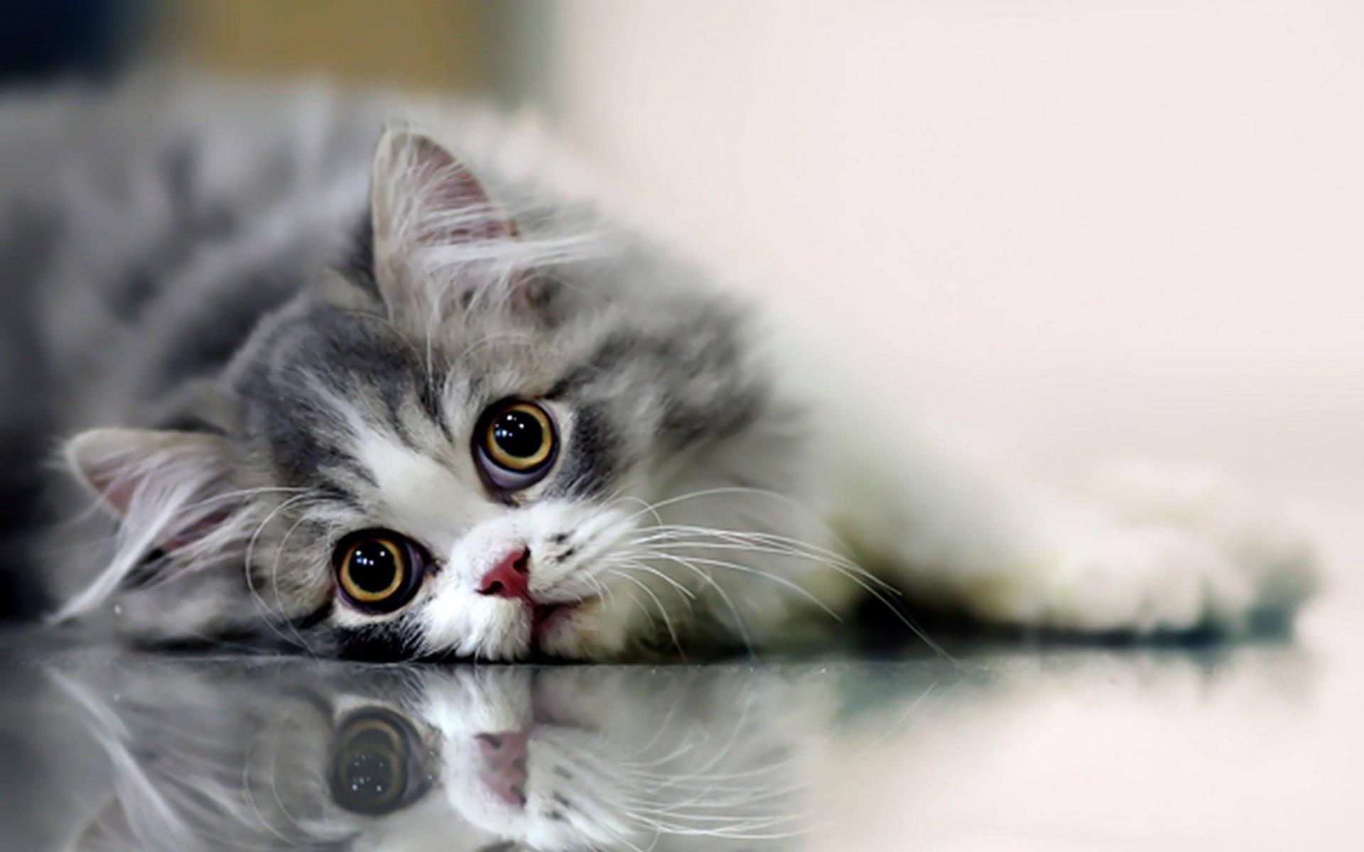 Beautifull Cat Cats Wallpaper 14749885 Fanpop Pictures to 1920x1200