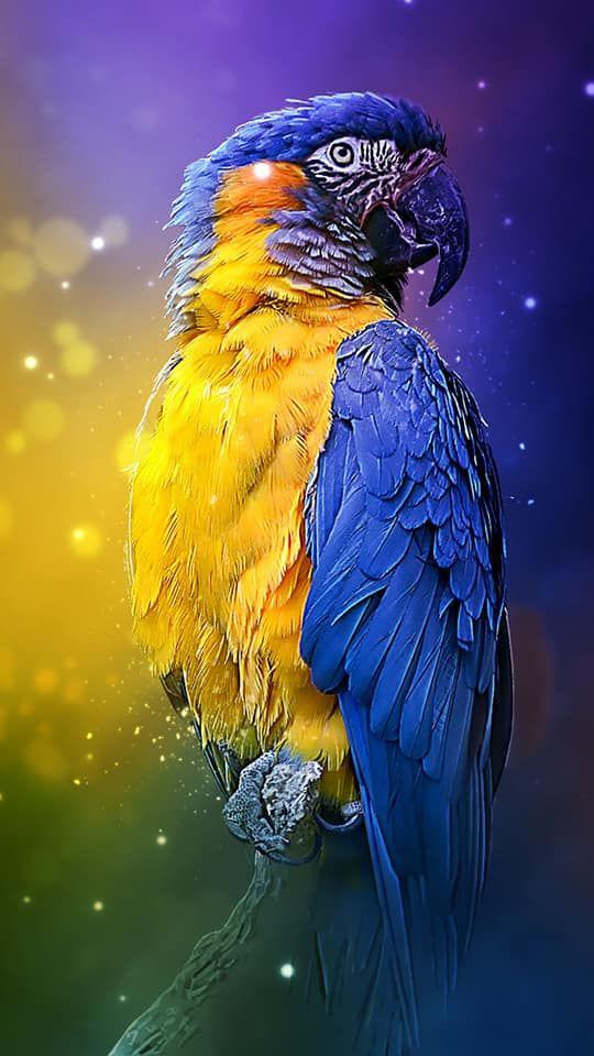 Mobile phone background images animales en su habitat Parrot 540x960