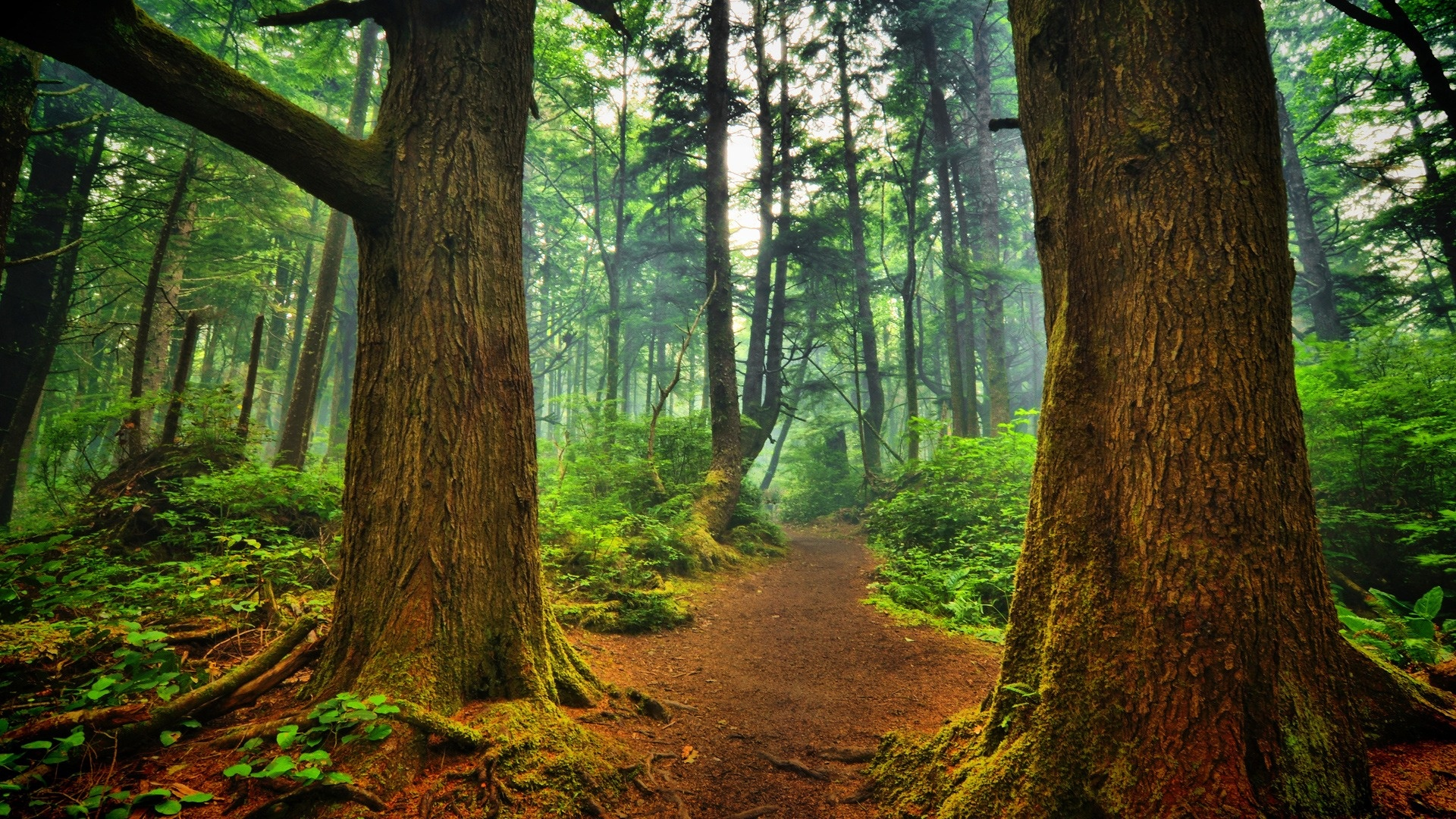 ... Wallpapers, Full HD Wallpapers 1080p, 14991_forest_forest_path.jpg