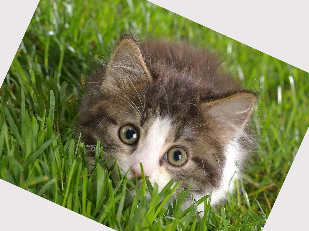 49+ Free Wallpapers and Screensavers Cats on WallpaperSafari