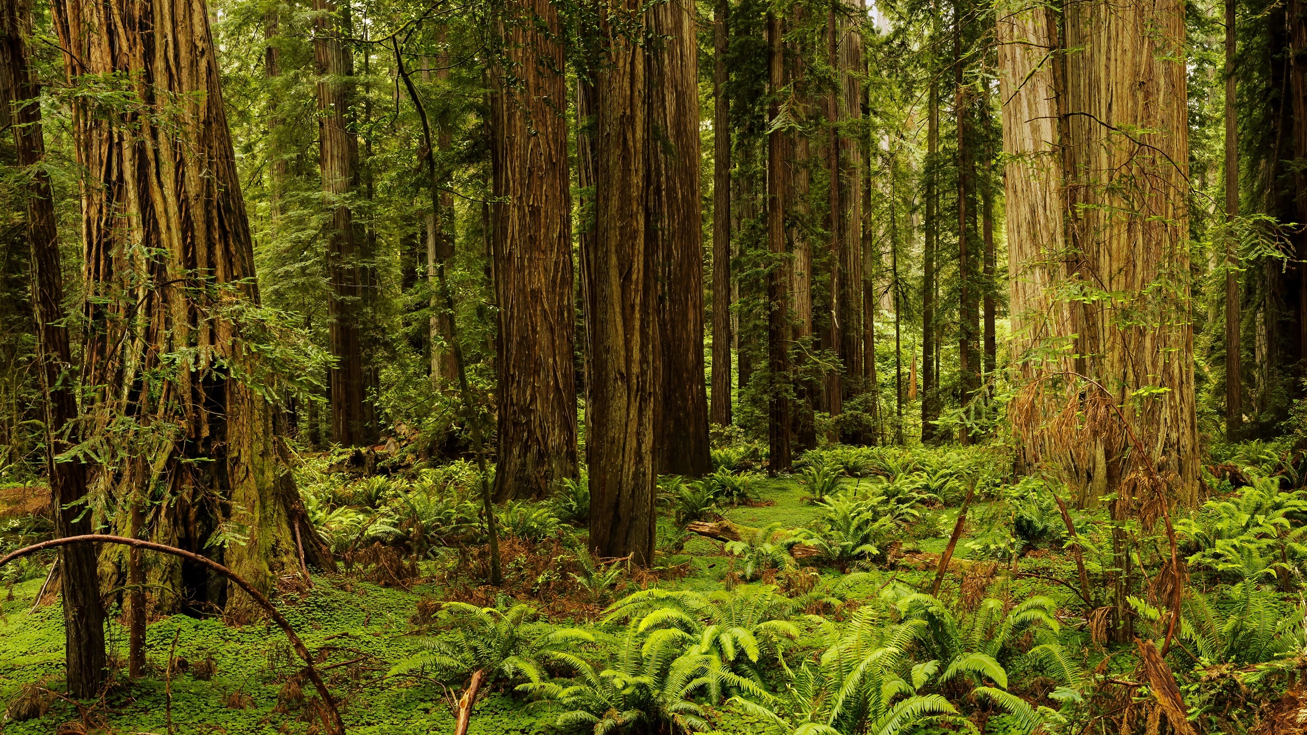 USA California Redwood National And State Parks forest trees 2560x1440