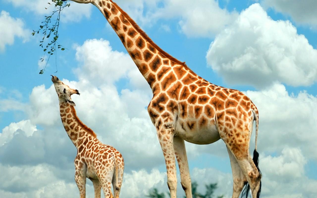 Animal World Wallpaper Of Animals Windows Desktop Images Freedom 1280x800