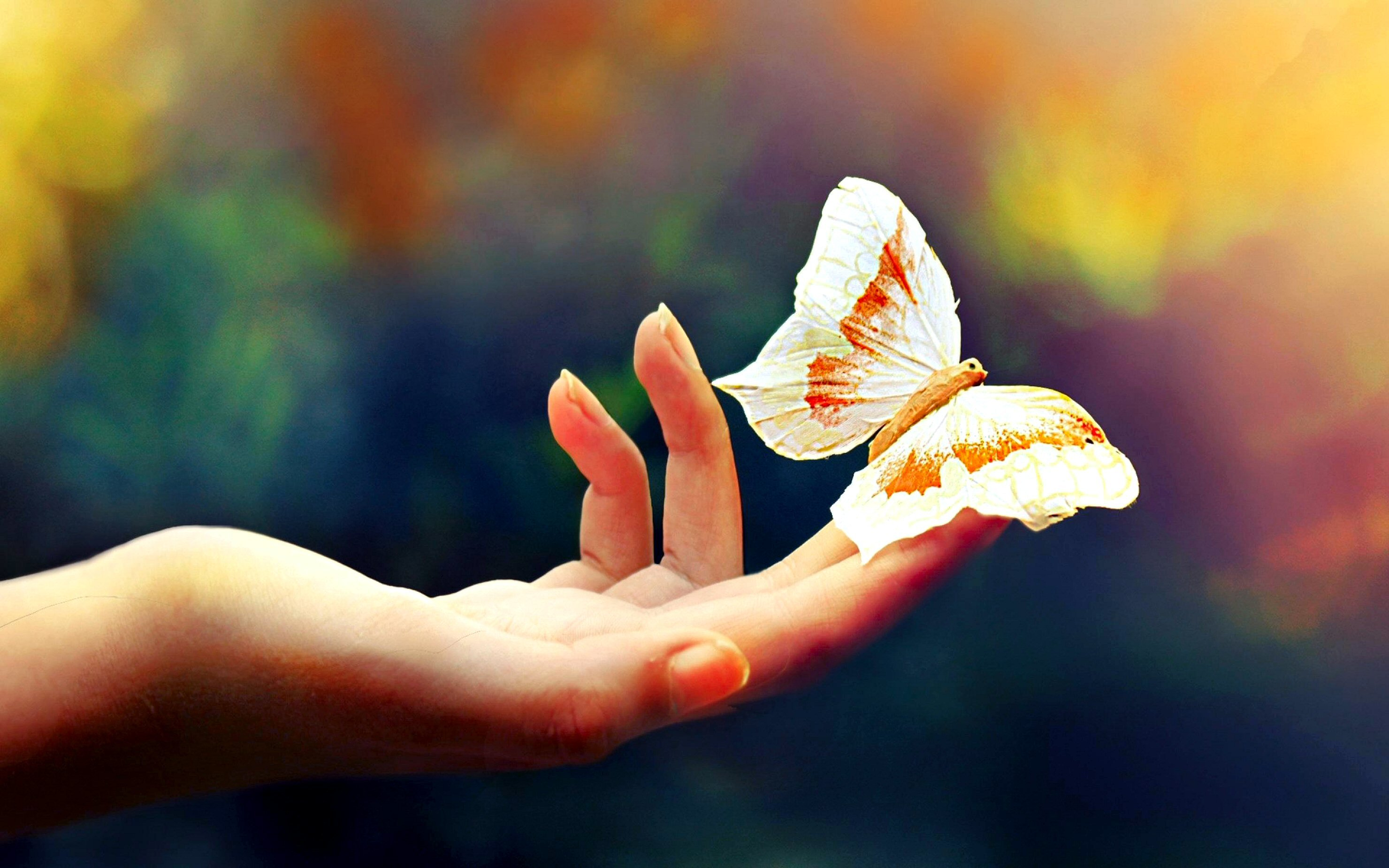 Butterfly Wallpapers Download Cute Colorful HD Desktop 2960x1850