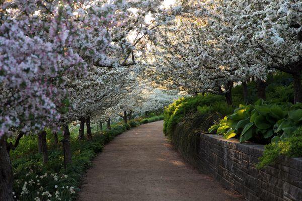 Spring Photos 600x400