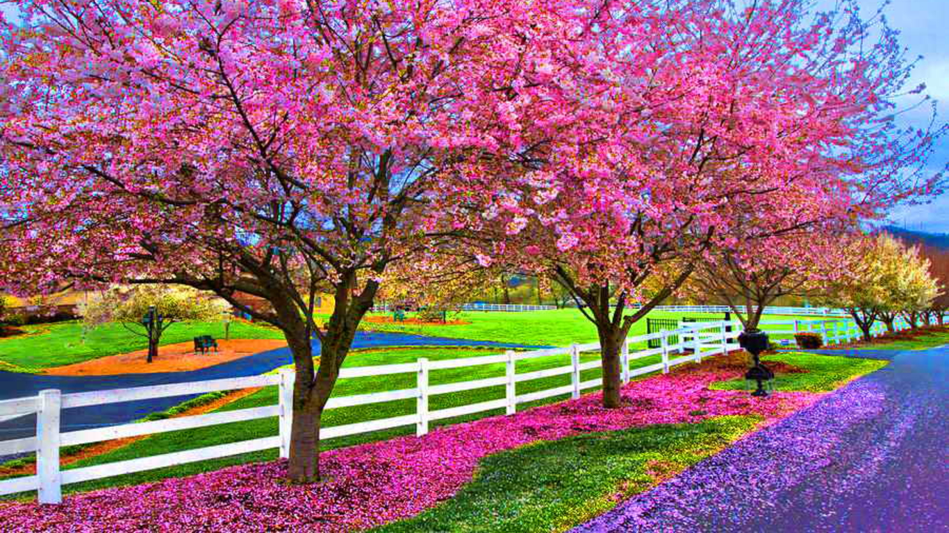 35 Beautiful Spring Pictures And Wallpapers: Spring Scene Wallpaper Landscapes