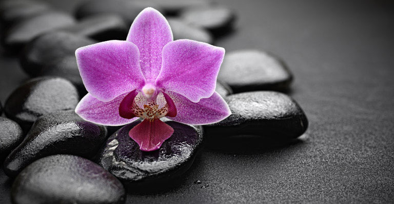 spa flower custom wallpapers zen spa flower 768x399