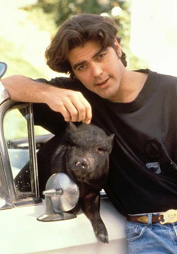 Young George Clooney with his pet pig Men that are ALMOST as 610x874