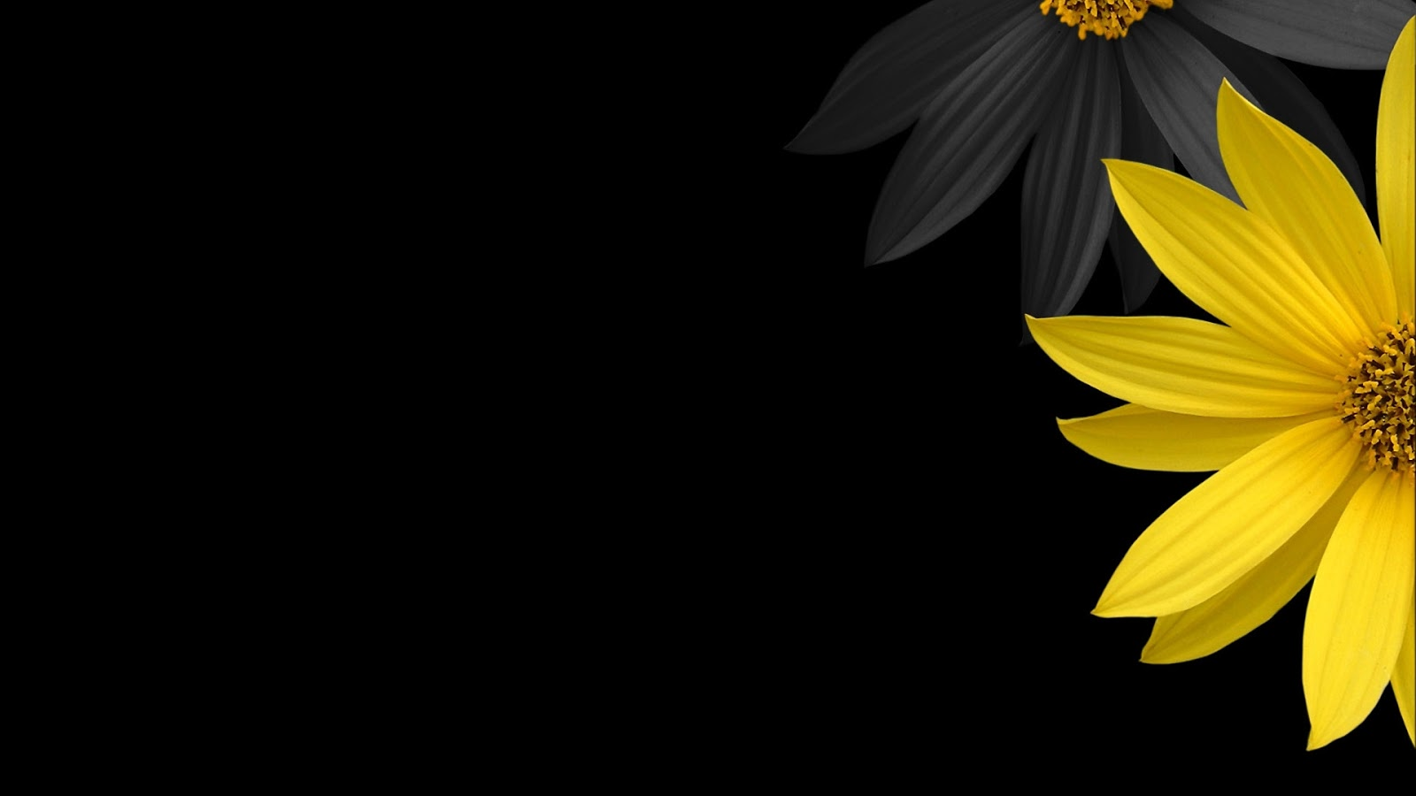 HD Wallpapers 1920x1080 Black Background Yellow Flower 1600x900