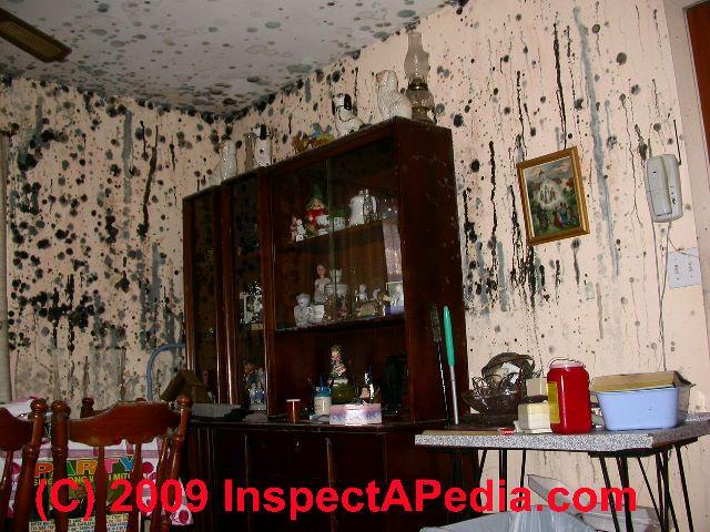 49 Black Mold Under Wallpaper On Wallpapersafari