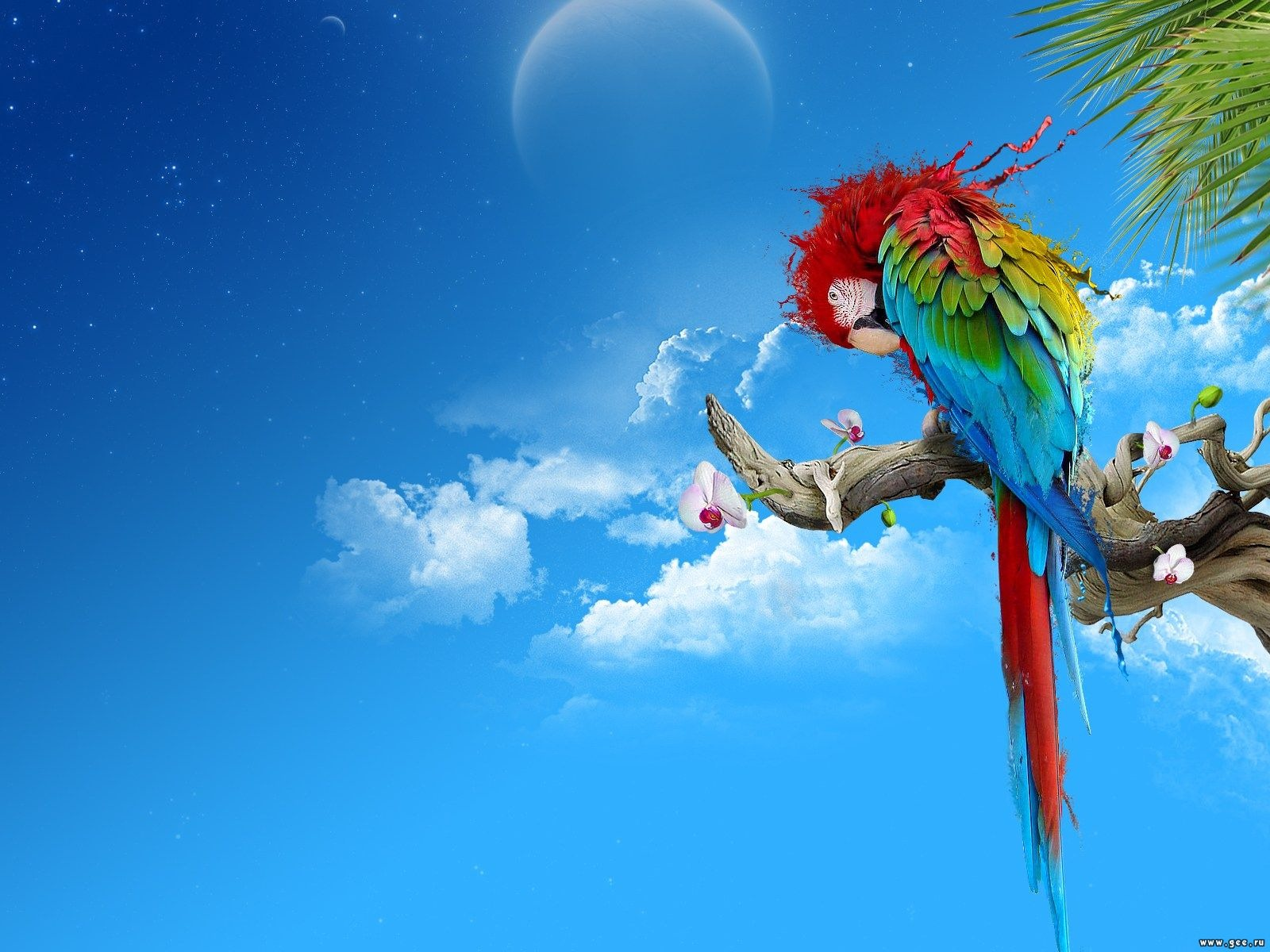 Colorful Desktop Wallpapers Backgrounds 1600x1200