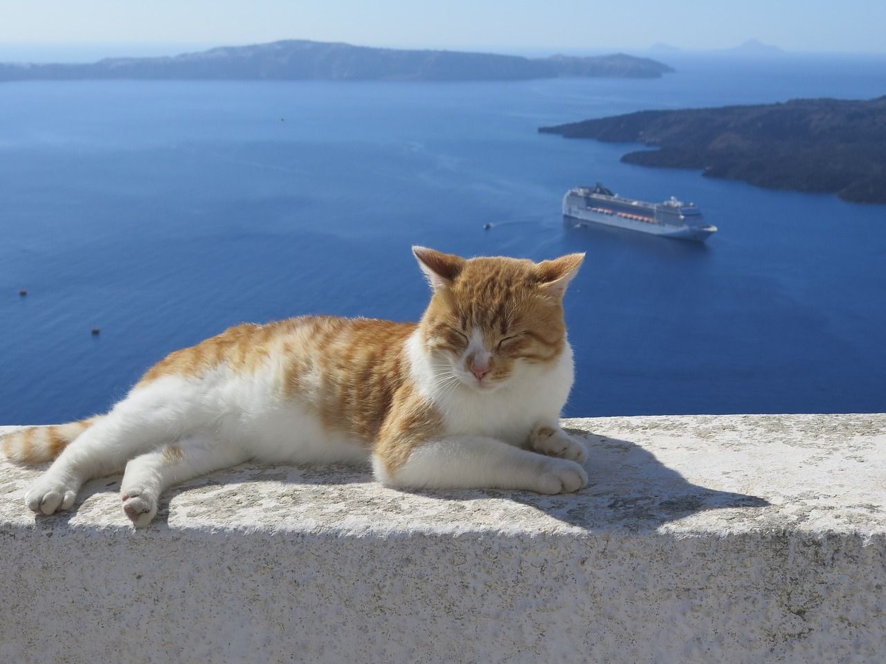 Image on Pixabay   Santorini Cat Cruise Cats Cats 1280x960