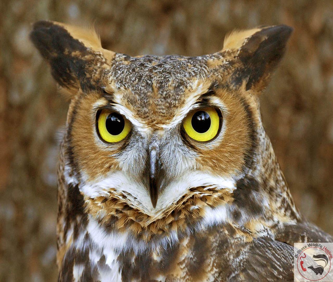 Missouri Wildlife Desktop Wallpaper 1280x1084